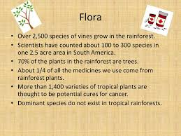 Dominant Plants Of The Tropical Rainforest - tropical rainforest alec lalone what is a tropical rainforest