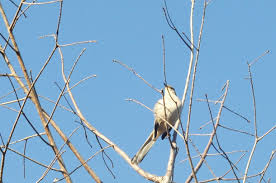 a natural nester family bird watching u0026 the great backyard bird count