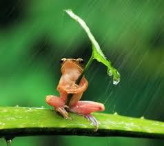 Funny Frog Meme - create meme super umbrella super umbrella funny frog tree frog