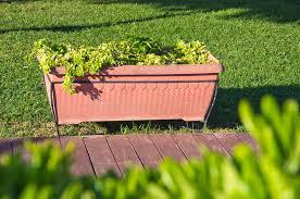 ornamental plants growing in a pot in garden stock photo image