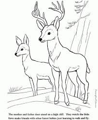 the stylish coloring pages of deer pertaining to motivate cool