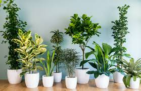 top 10 plants for purifying the air at home infographic