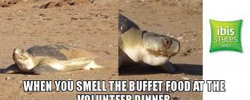 Turtle Meme - end of season turtle dinner care for hedland