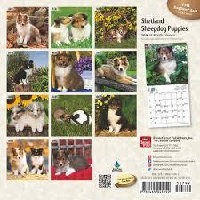 australian shepherd 2016 calendar shetland sheepdog sheltie s dogbreed gifts com shetland