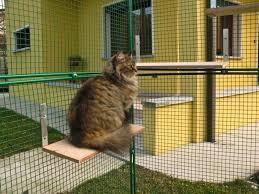 gabbie scoiattoli gabbia gatti gabbia felini gabbia pappagalli gabbia scoiattoli