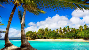 amazing trees on sea beach hd pics mojmalnews com