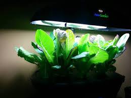 Aerogarden by Aerogarden Romaine Lettuce 23 Days After Planting Gardening