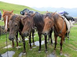 price horses jpg