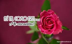 imagenes tiernas y romanticas imágenes de una rosa con frases de amor tiernas y románticas