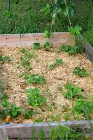 summer gardens dealing with high temperatures in the garden