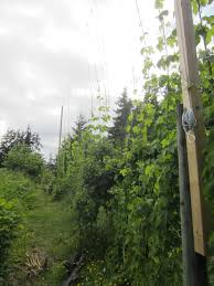 trellis construction hops trellis 20 years and plays