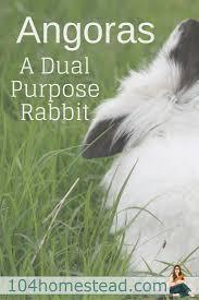why rabbits make great pets