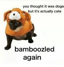 you thought it was doge but it s actually cate bamboozled again