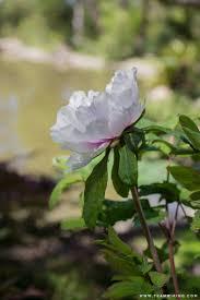 a tour of lotusland hej doll a california travel life and