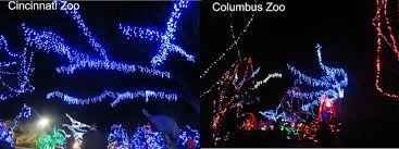 columbus zoo christmas lights violet s silver lining december 2013