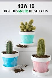 best 25 cactus care ideas on pinterest christmas cactus care