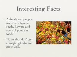 interesting facts about plants for my web value