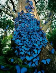 express o butterfly tree