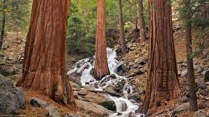 california wood waterfall cascading redwoods beautiful forest sequoias waterfalls