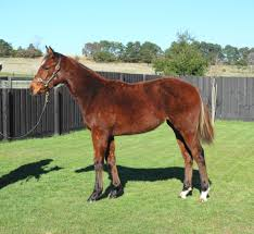 inglis 2017 great southern sale home