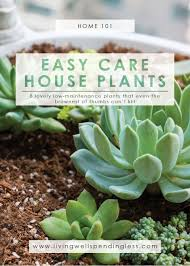 perfect easiest houseplants for house plants decor grouping on