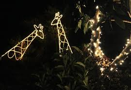 6 best christmas light displays in northern california in 2016