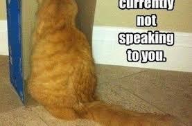 Sad Cat Meme - sad cat meme