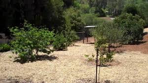 via del toro backyard and orchard youtube