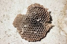 bee hive free stock photo public domain pictures