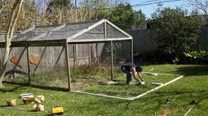 raising backyard chickens the buzz magazines