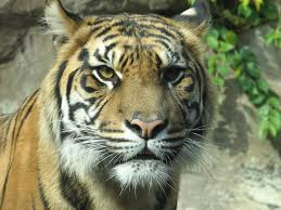 West Virginia wild animals images Wild and exotic animals and west virginia the national humane jpg