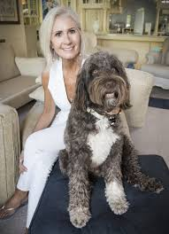 pet set dogs travel in lap of luxury on land and sea