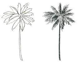 mara mattia art lesson 26 trees in a watercolor painting