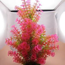 13 best for my fish tank images on fish tanks fish