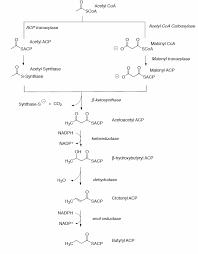 36 fatty acid pathways and regulation worksheet chemistry