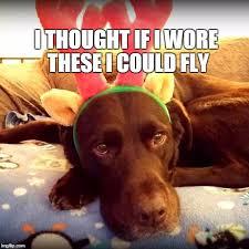 Christmas Dog Meme - christmas antlers make you fly imgflip