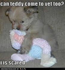 Cute Puppies Meme - awww cute puppy meme teddy bear lolanimals starbaby3