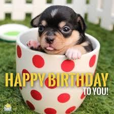 Happy Birthday Meme Dog - tag for dog happy birthday images cute dog happy birthday