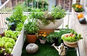 pflanzen fã r den balkon chestha anbau balkon idee