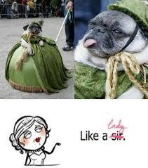 Dog Lady Meme - pug dressed like a lady