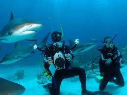the bahamas vacation diving in nassau bahamas yfgt
