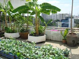 Rooftop Patio Design Garden Glorious Rooftop Patio Design With Bananas Trees Also