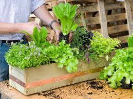 5 easy gardening projects to tackle on earth day hgtv u0027s