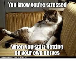 Make Your Own Grumpy Cat Meme - 25 best memes about nerves nerves memes