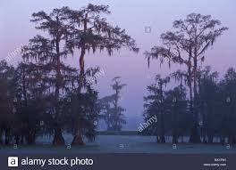Louisiana scenery images Breaux bridge lake martin reserve fogs lake louisiana marsh mood jpg
