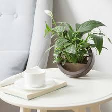 wall hanging flower plant pot planter bonsai round square storage