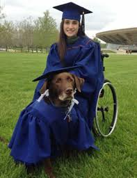 cap and gowns service dog wears cap and gown at graduation dejohn pet
