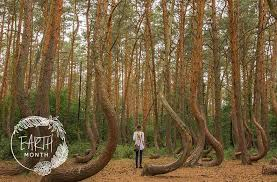 Tennessee Forest images 9 truly epic forest bathing destinations well good jpg