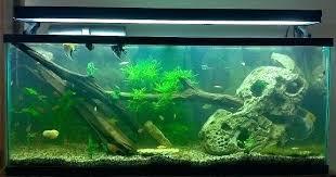 marineland aquatic plant led lighting system w timer 48 60 marineland aquatic plant led light with timer plant led by f one