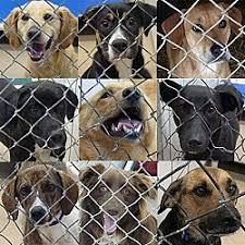 Dogs For The Blind Adoption Toronto Ontario Dogs And Puppies For Adoption From Ugly Mutts